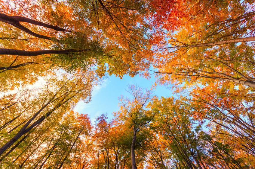 National Fall Foliage Week at the Pawnshop
